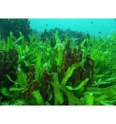 محلول آنتی بایوفولینگ (ضد جلبک) گرین پاور